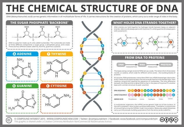 DNA Structure & Function: A Simple Guide for Beginners