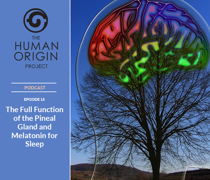 The Entire Function of the Pineal Gland   Human Brain Parts